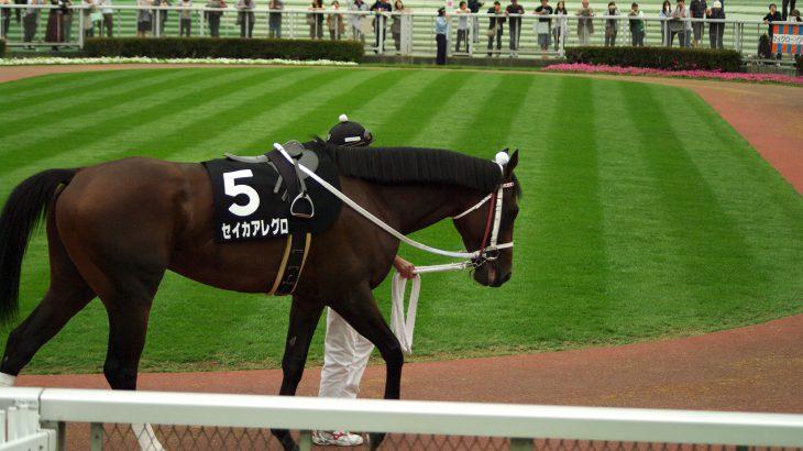 フィリアプーラ③~福島牝馬S出走!