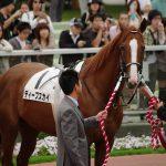 2020年2月16日(日)K理論競馬予想・東京版